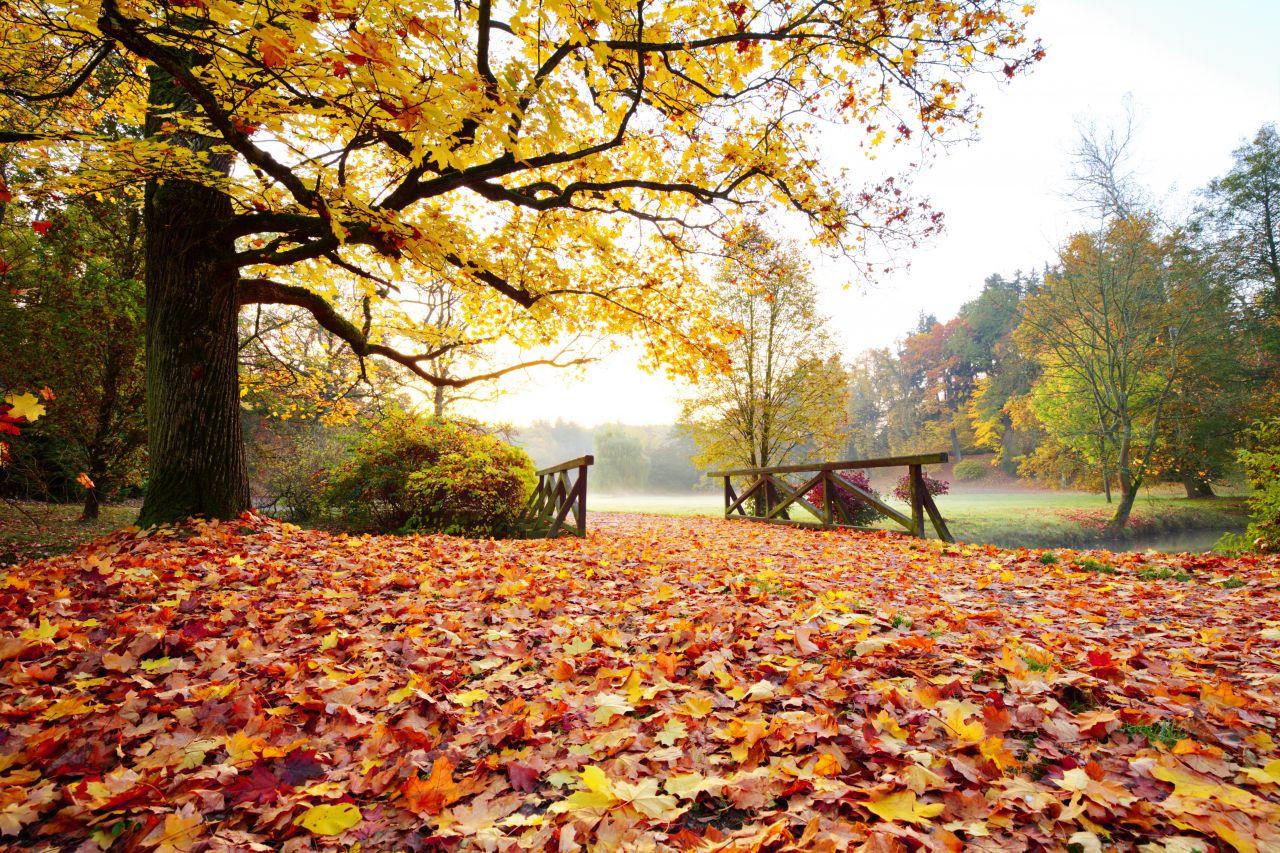 Warum werden im Herbst die Blätter bunt?