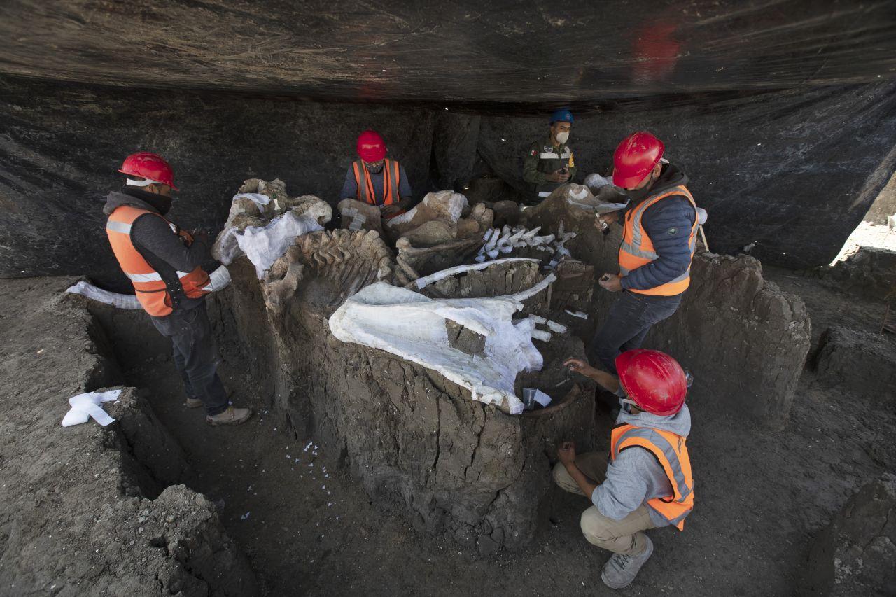Fund Mammut-Skelette in Mexiko