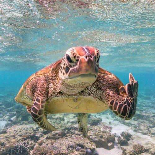 Lustiges Foto einer Schildkröte