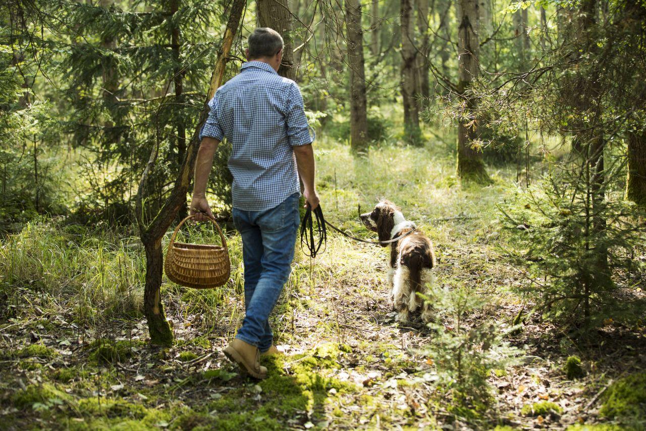 Pilze sammeln geht auch im Frühling: Tipps zum Suchen und Zubereiten