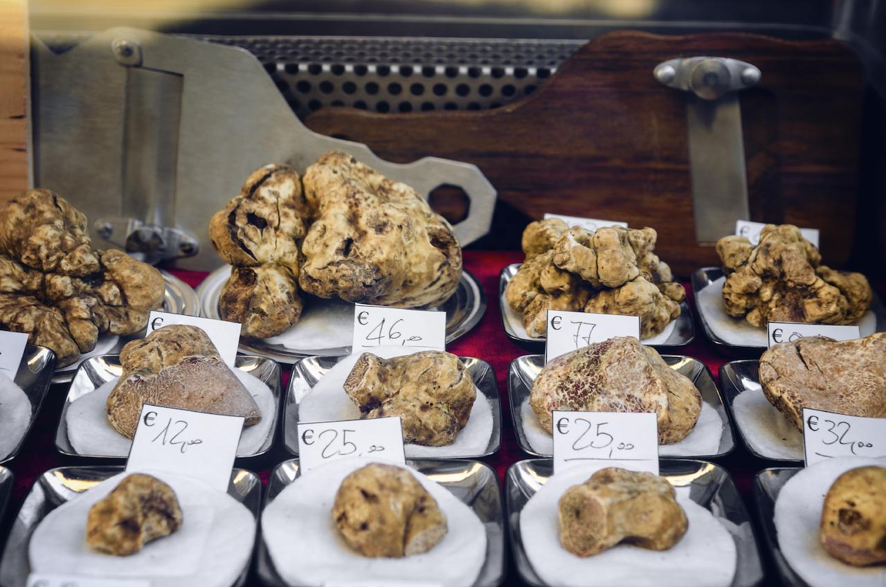 Weißer Trüffel auf einem Trüffelmarkt im Piemont, Italien. Teuerstes Lebensmittel