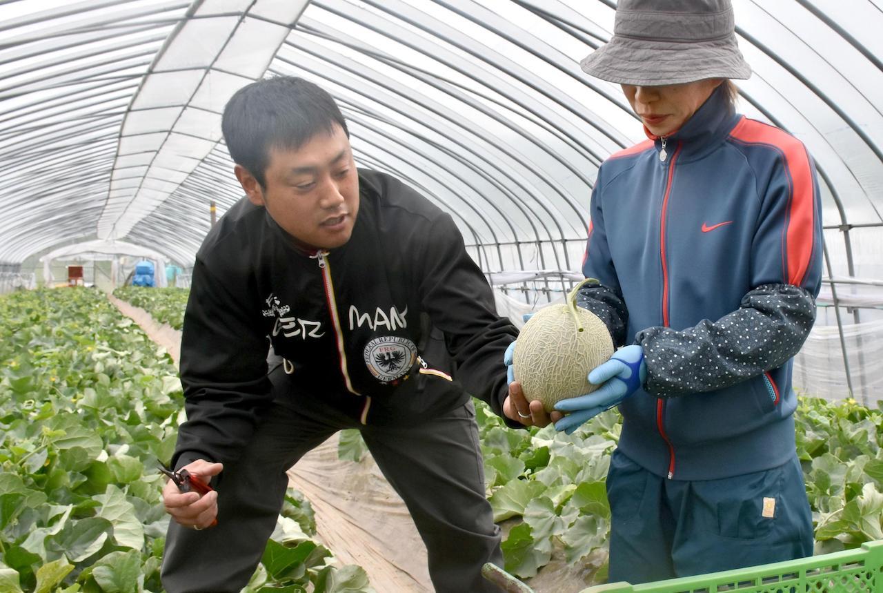 Takahiro Kobayashi züchtet die Yubari King Melone in Japan. Die teuerste Melone der Welt