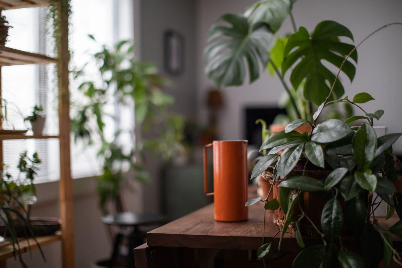 Welche Zimmerpflanzen du dir anschaffen solltest