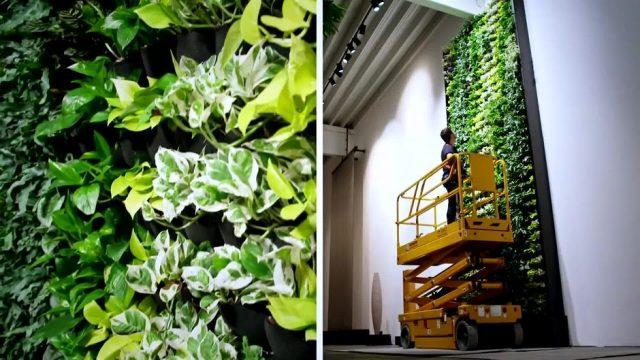 Dschungel zu Hause: So funktionieren grüne Wände - 10s