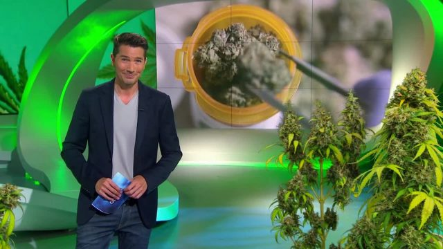 Montag: So steht es um das Thema Cannabis in Deutschland