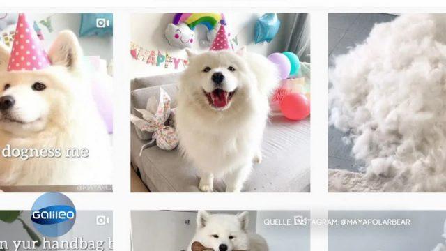 Tierisch erfolgreich: Wie Petfluencer aus Social Media Geld verdienen