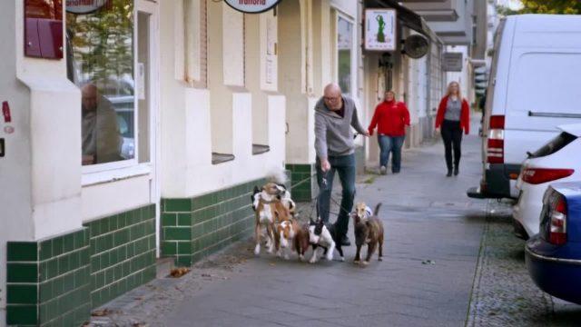 Wie anstrengend ist der Job des Hundesitters?