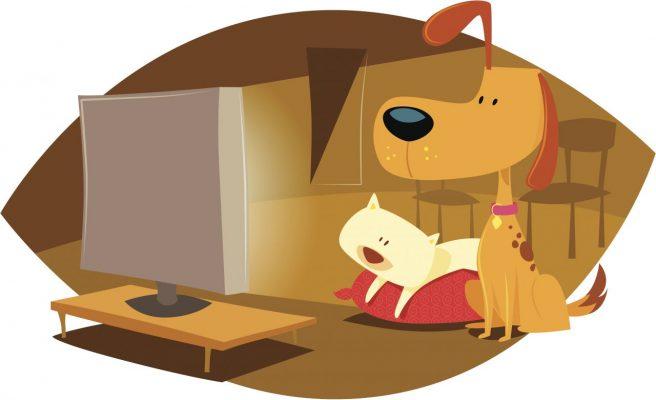 Hund und Katze sehen fern