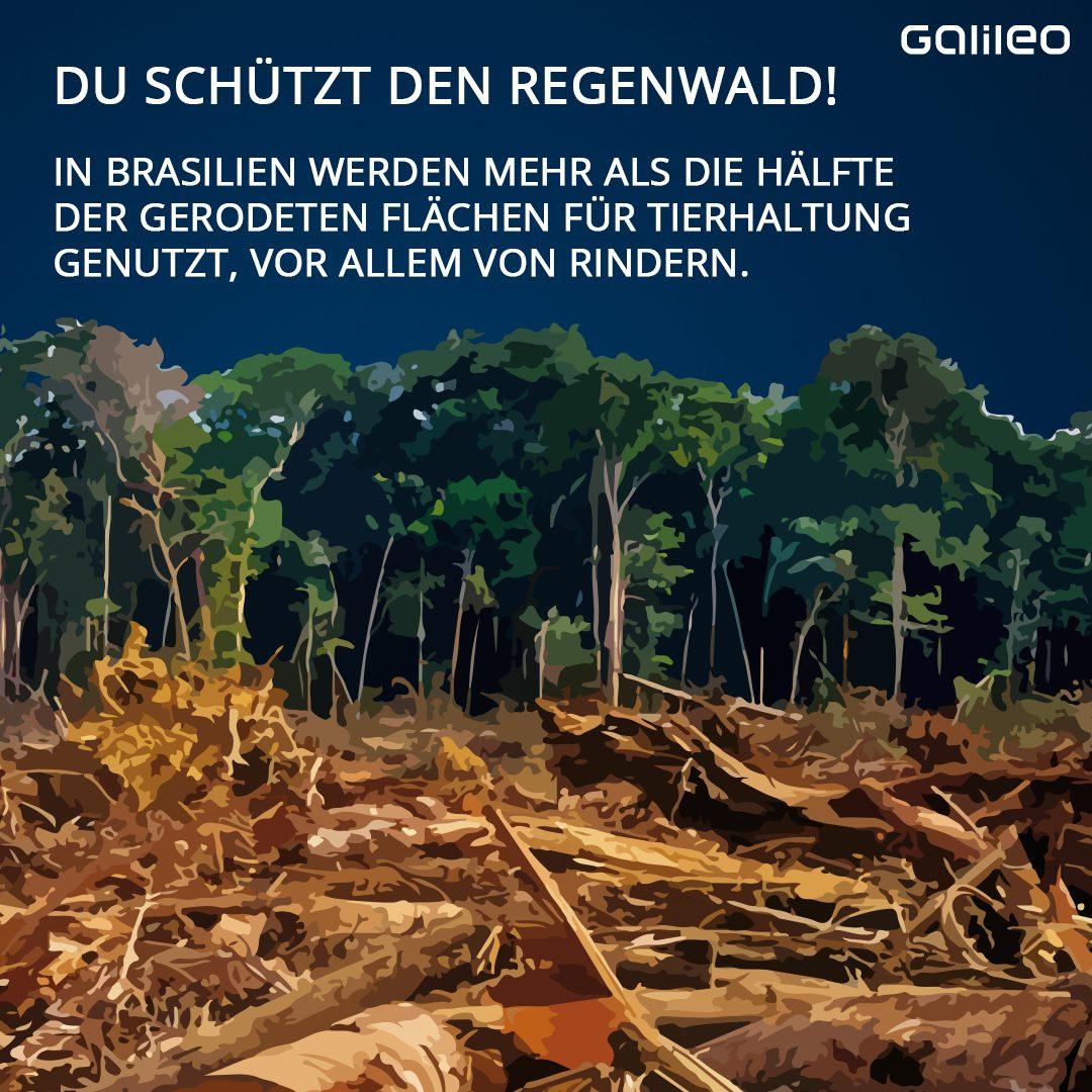 Fleischkonsum Regenwald Schutz