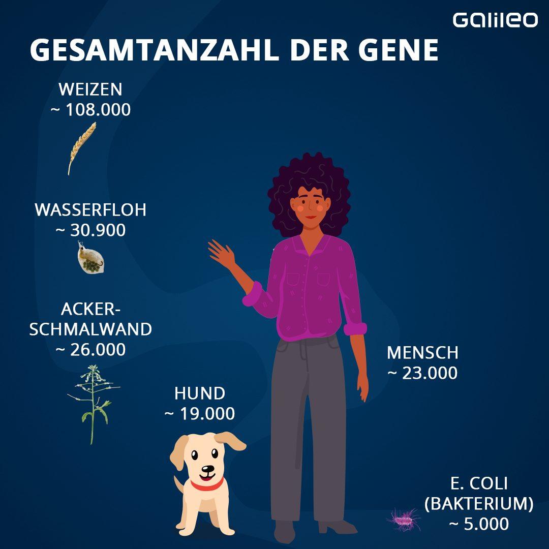 Gesamtzahl der Gene verschiedener Organismen