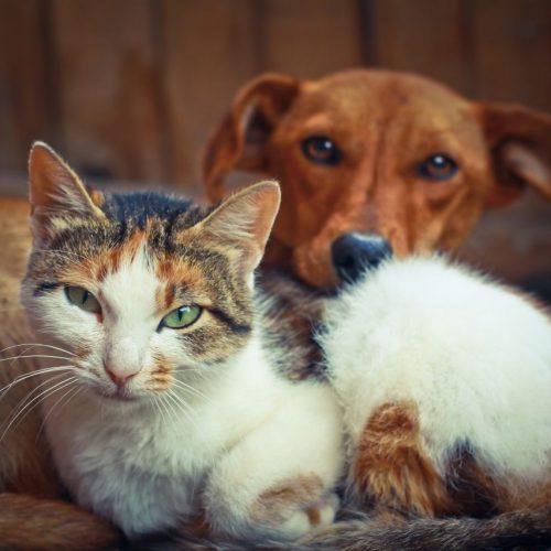 Hund und Katze