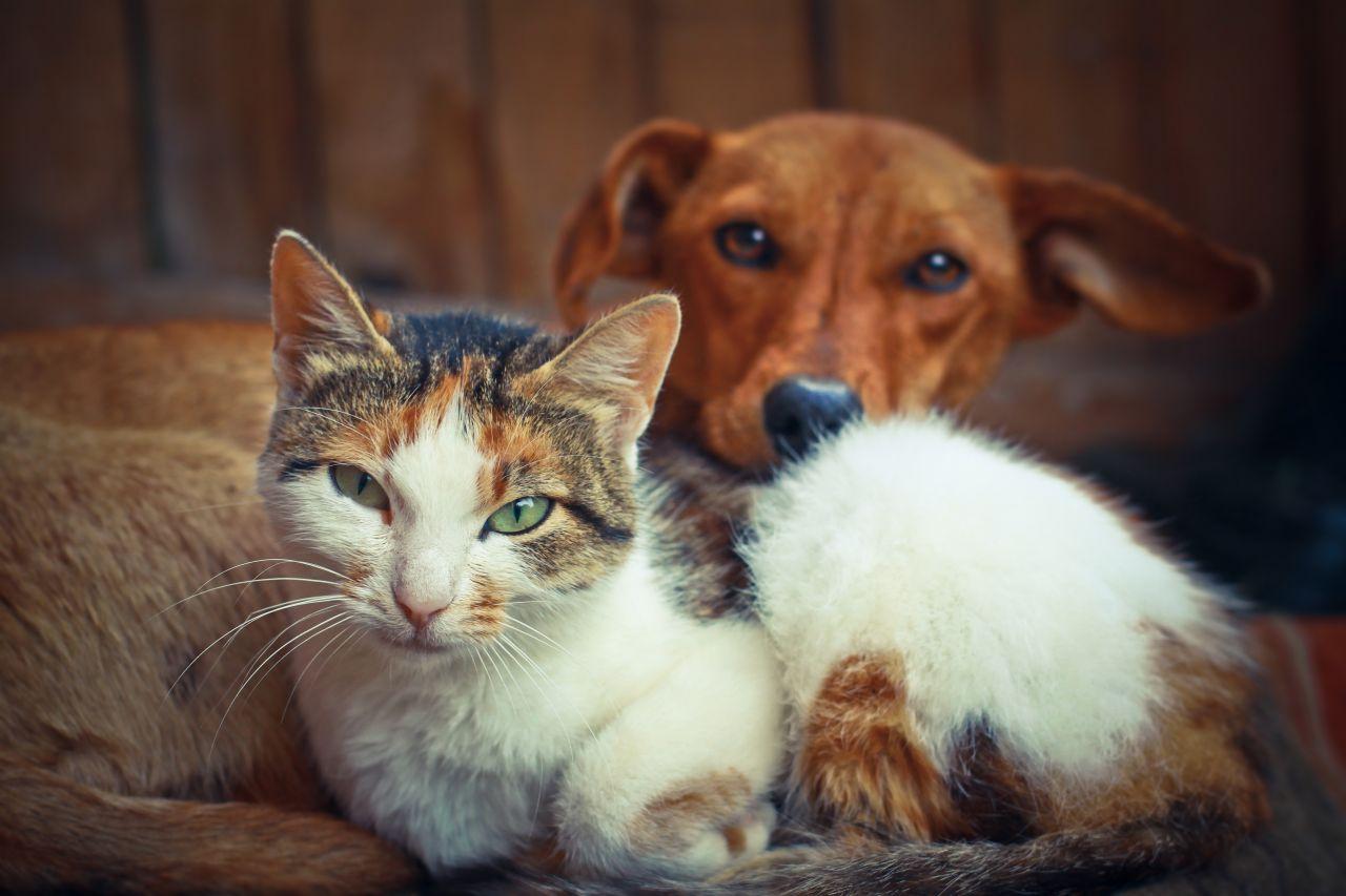 Können Hunde und Katzen Farben sehen?