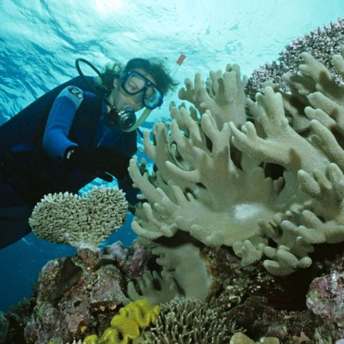 Riesen-Riff vor Australien Great Barrier Reef