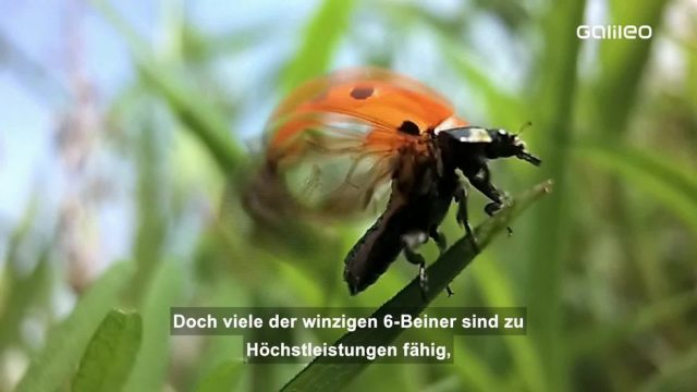 Das Duell: Insekt vs. Mensch