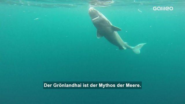 Dem Grönlandhai auf der Spur