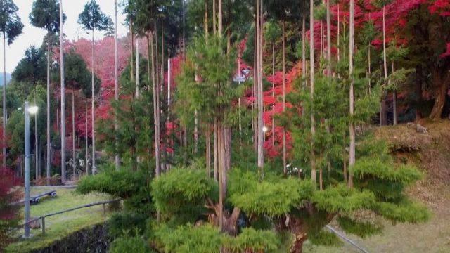 Holz gewinnen ohne Bäume fällen - Japan macht es vor!