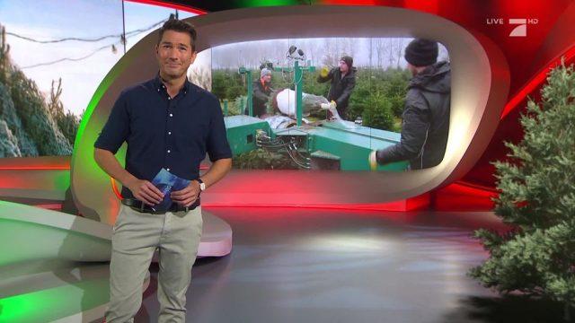 Montag: Wie hart ist die Arbeit auf einer Tannenbaumplantage?
