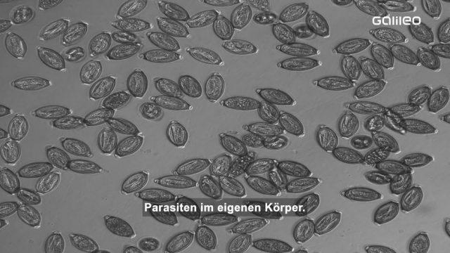 Parasiten im Körper