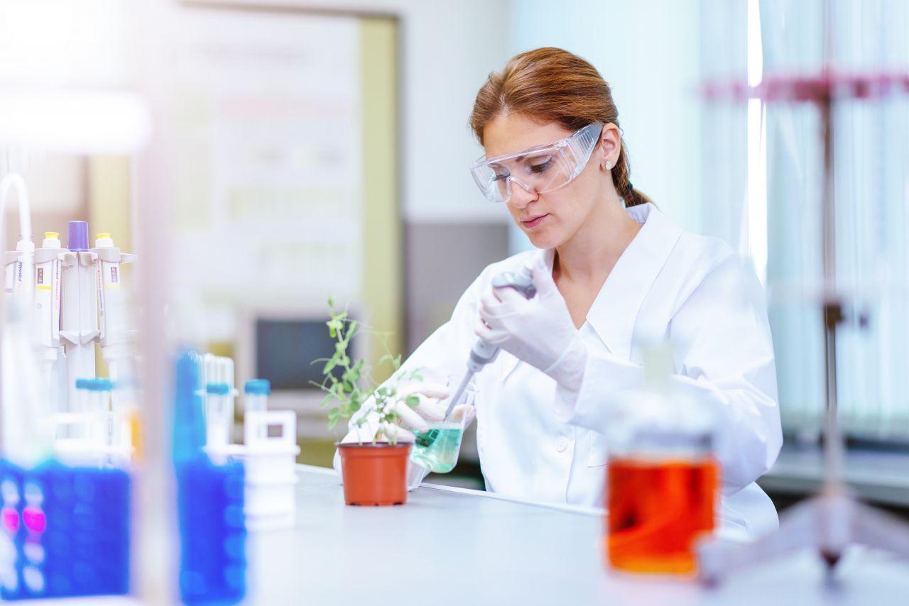 Gentechnik: So werden Lebensmittel gentechnisch verändert