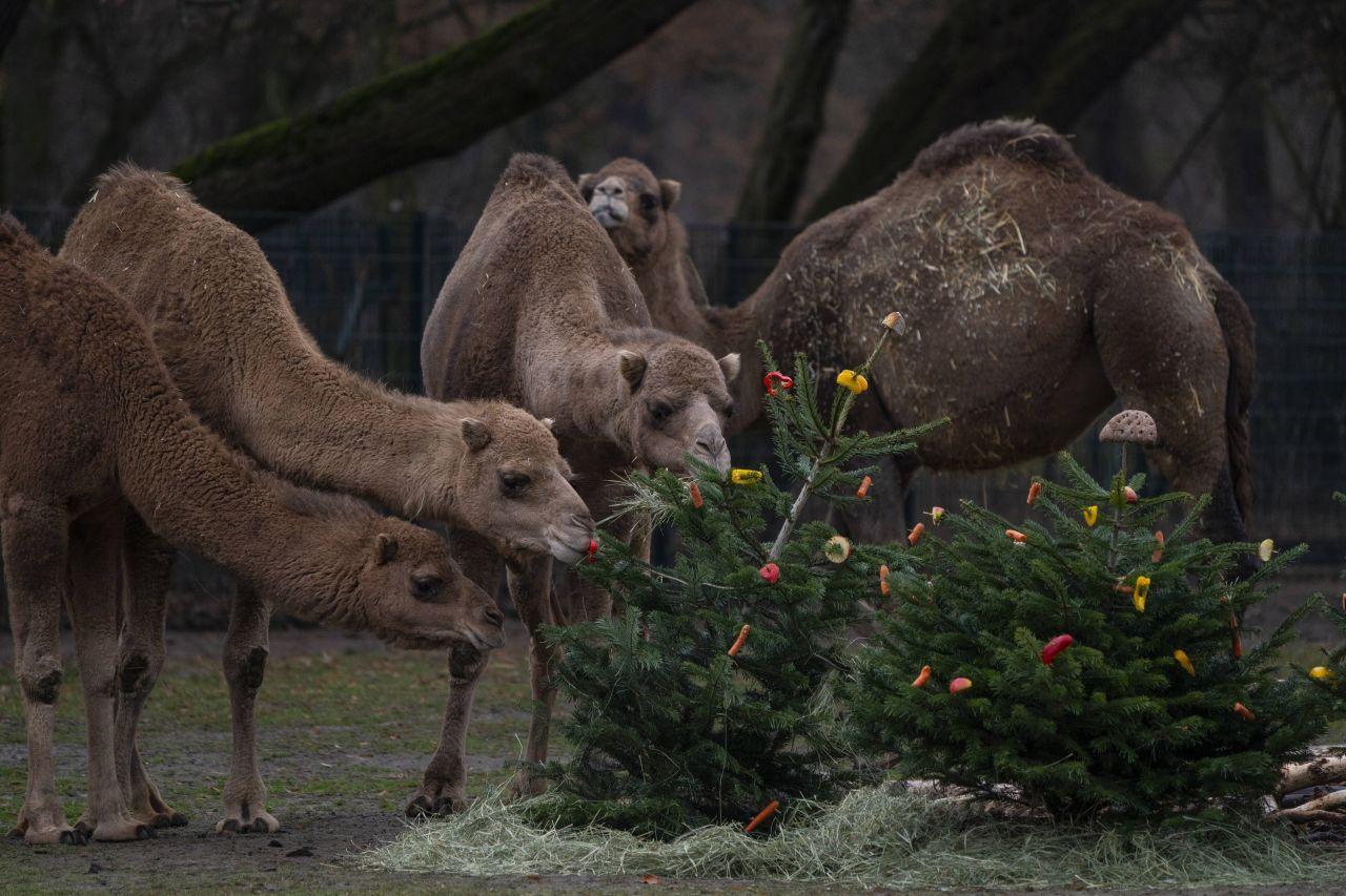 Weihnachtsbaum als Tierfutter