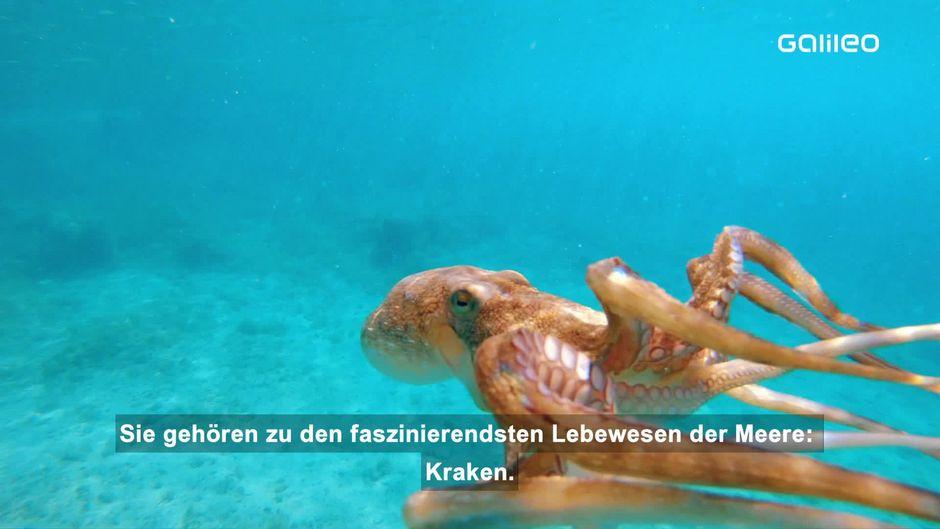 Alles über Kraken