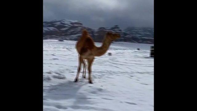 Clips der Woche: Schnee in der Wüste und Pinguine auf Abwegen - 10s