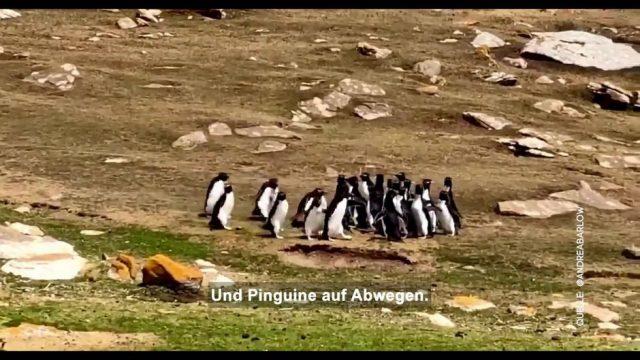 Clips der Woche: Schnee in der Wüste und Pinguine auf Abwegen