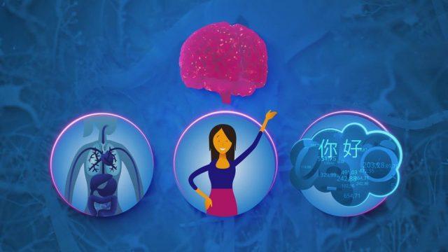 Gehirn: Wie es funktioniert und welcher Teil was steuert