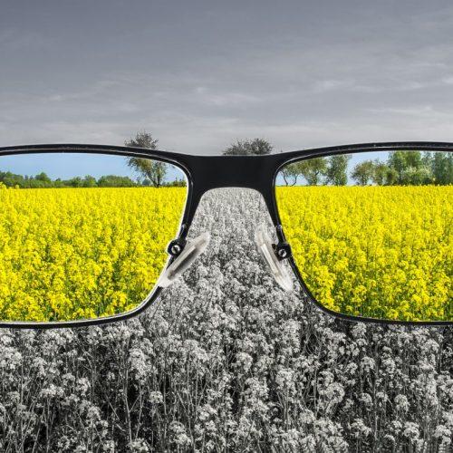 Eine Brille zeigt, wie Farbenblinde die Umwelt sehen: grau in grau.