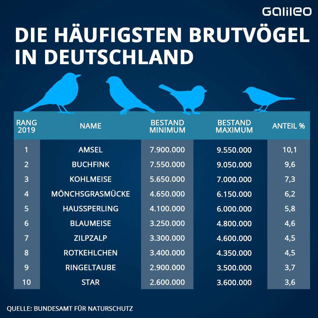 Die häufigsten Brutvögel in Deutschland