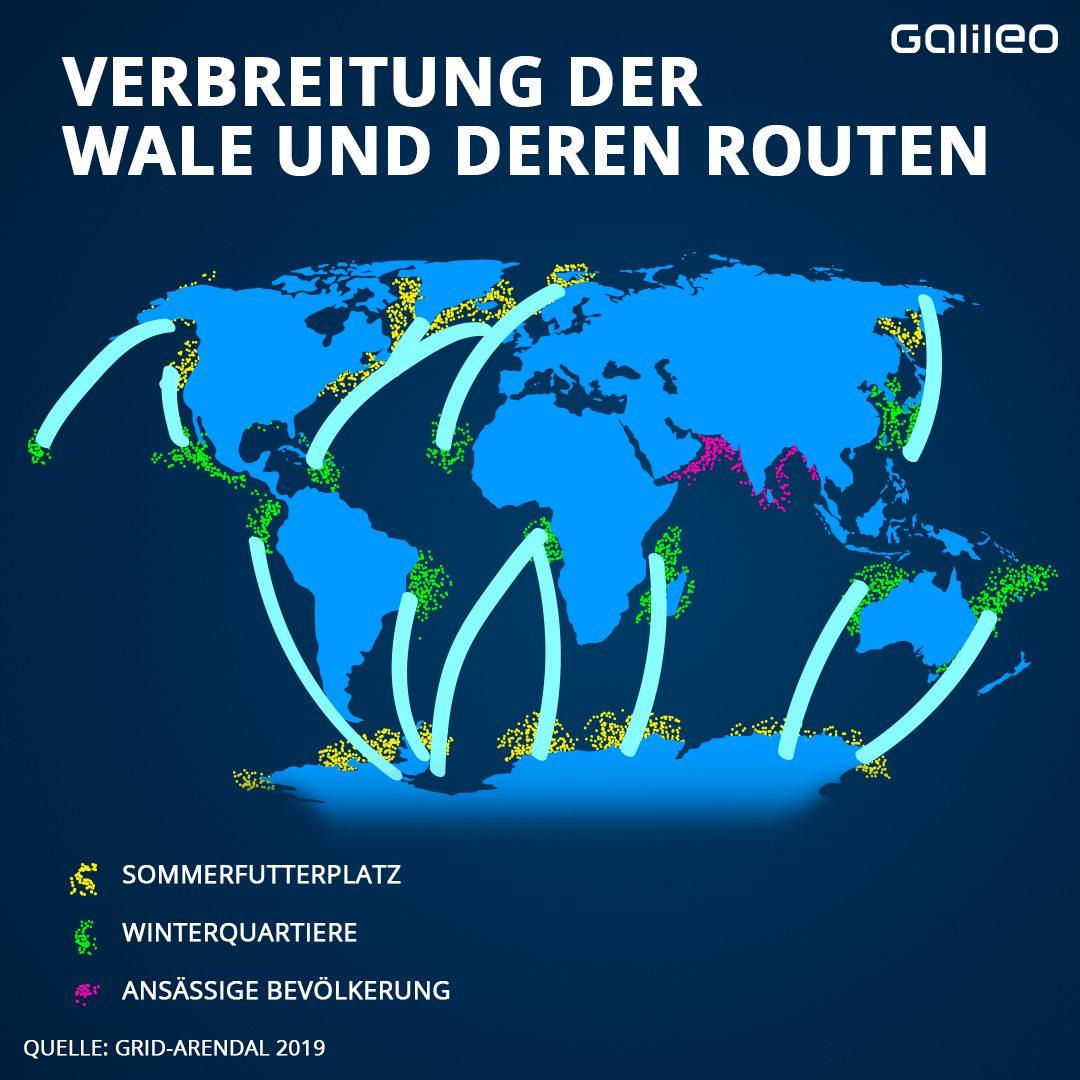 Verbreitung der Wale und deren Routen