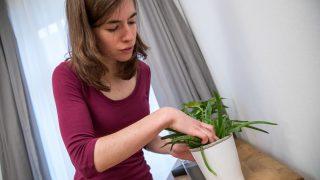 Eine junge Frau betrachtet eine Aloe-Vera-Pflanze.