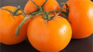 Vier, mit Wasser bespritzte, Auriga-Tomaten