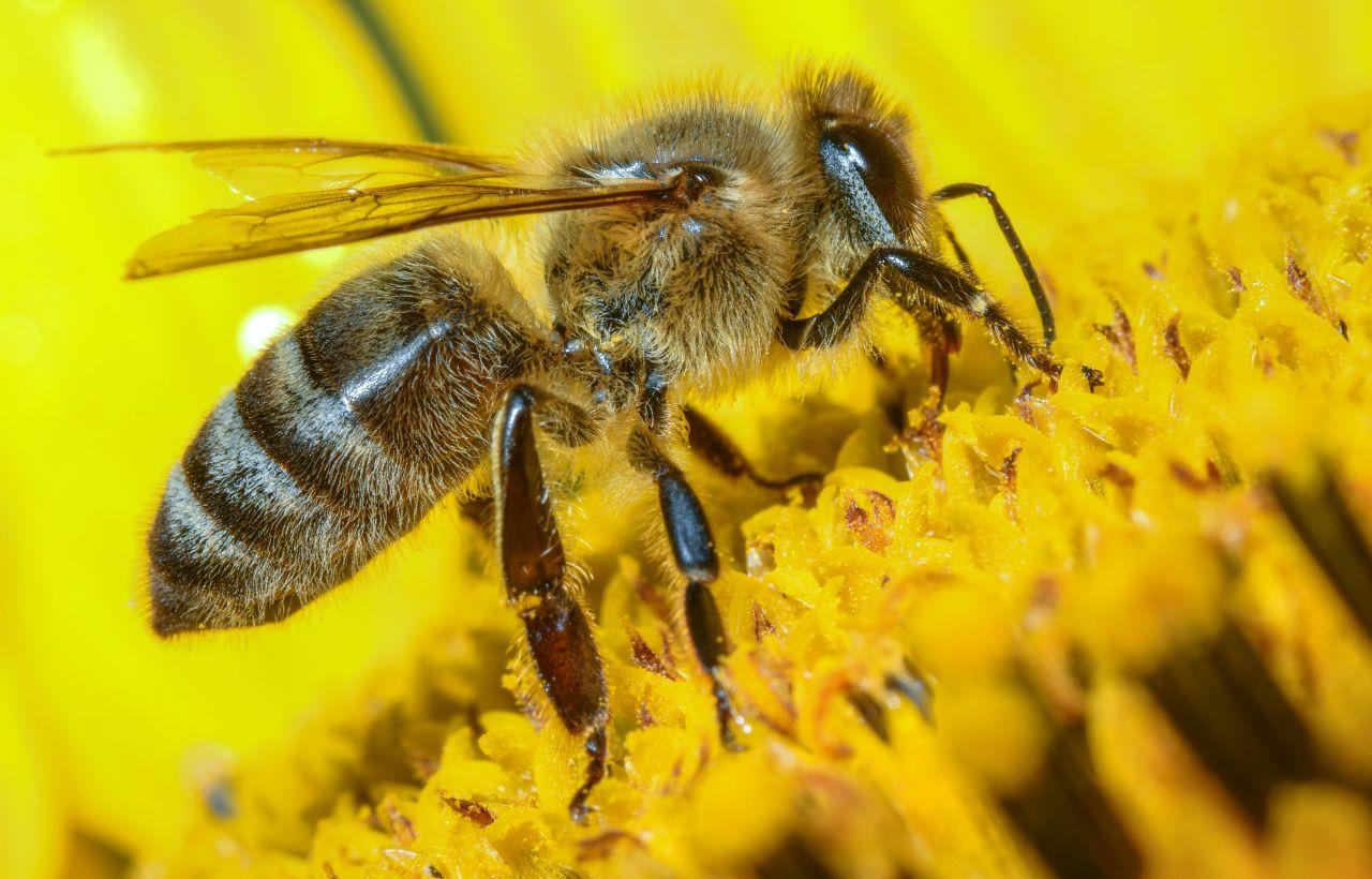 Bienen, Schlangen, Skorpione: Tier-Gift in der Medizin