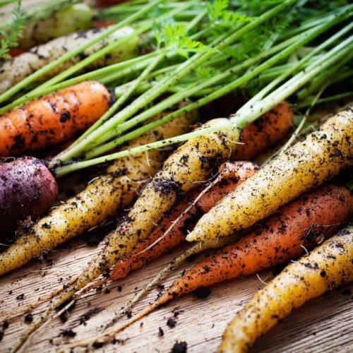 Karotten in unterschiedlichen Farben
