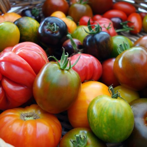 Verschiedene Tomatensorten in einem Korb