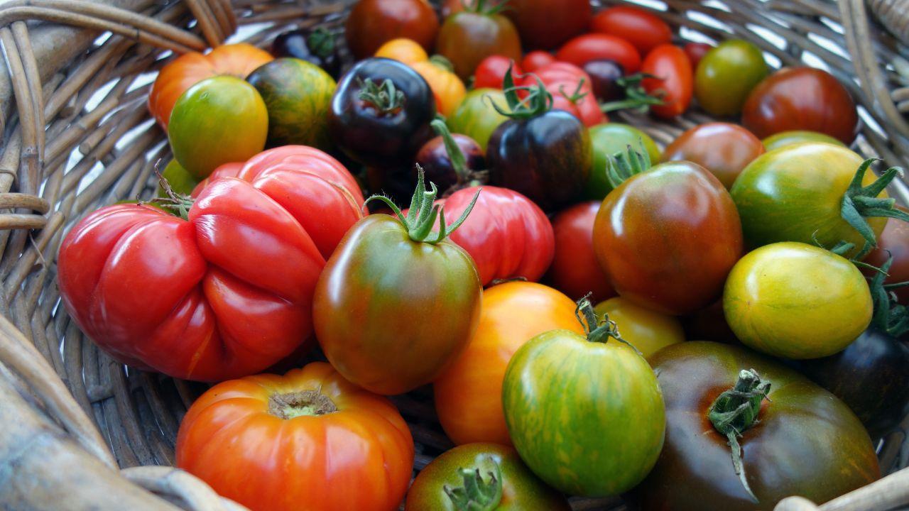 Rot, rund und gesund: Darum sind Tomaten ein idealer Snack