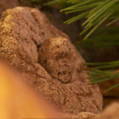Brot aus Baumrinde