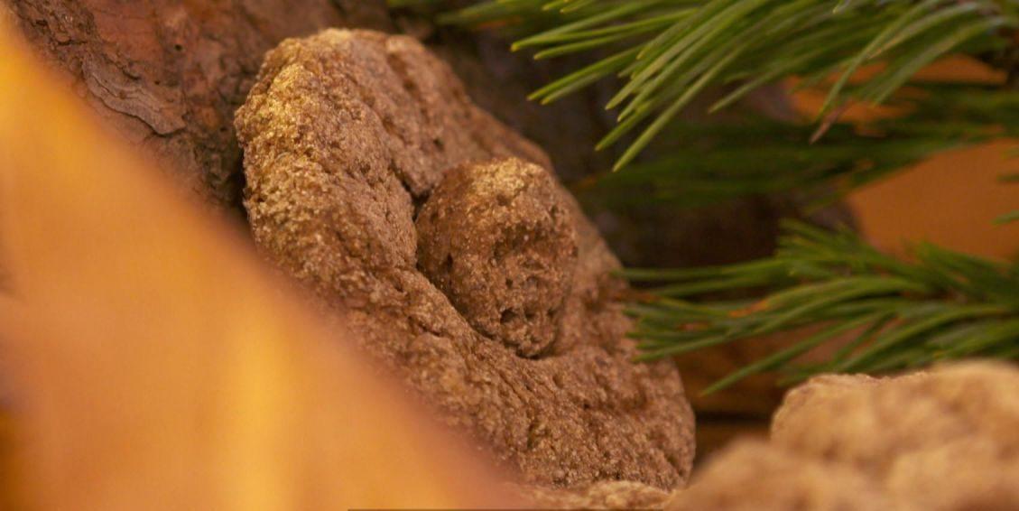 Brot aus Baumrinde oder Würmern? Solltest du mal probieren!