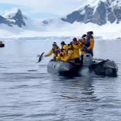 Glück gehabt: In unseren Clips der Woche schlägt dieser Pinguin einer Bande Orcas ein Schnippchen.