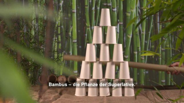 Bambus: Pflanze der Superlative