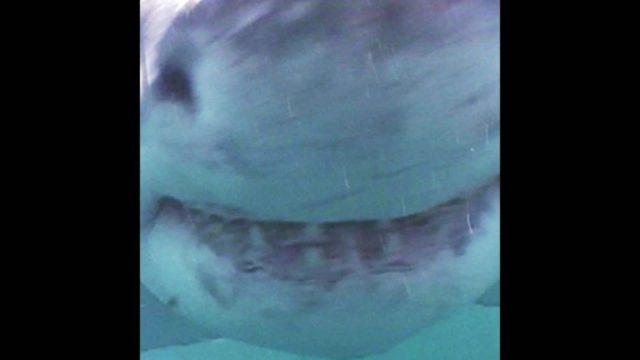 Deep Blue: Der größte Weiße Hai der Welt - 10s