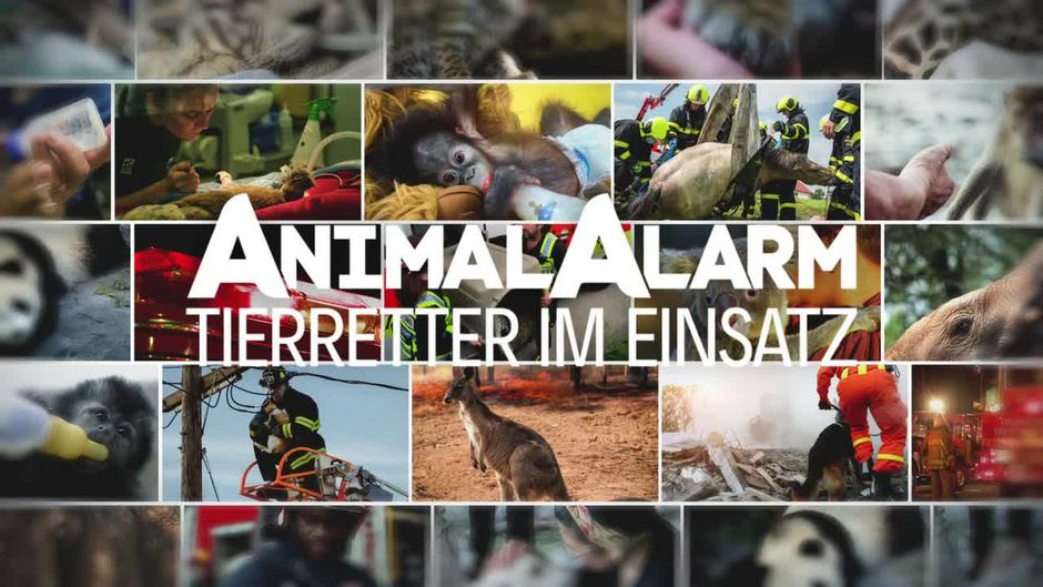Galileo Plus: Animal Alarm - Tierretter im Einsatz