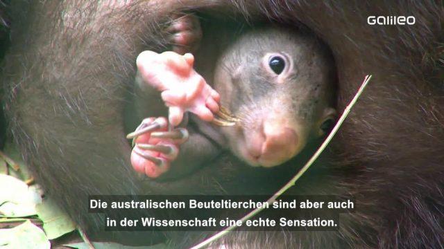 Warum ist der Kothaufen von Wombats würfelförmig?