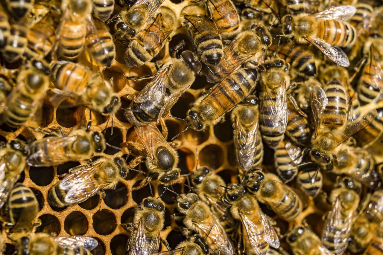 Ohne Bienen keine Menschen: Was du über Bienen wissen solltest