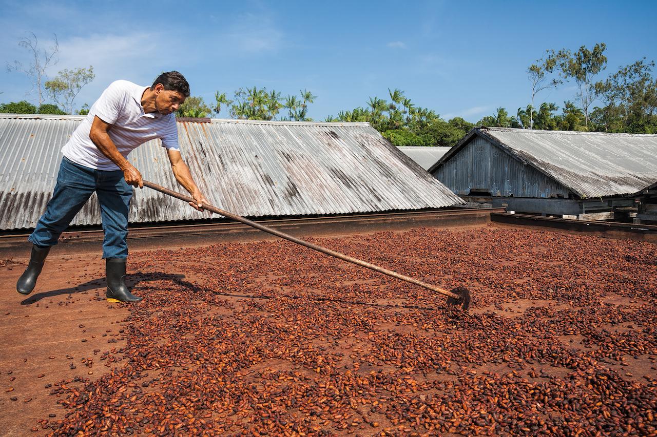 Kakaobohnen trocknen