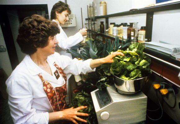 Frauen kontrollieren nach tschernobyl Gemüse auf Radioaktivität
