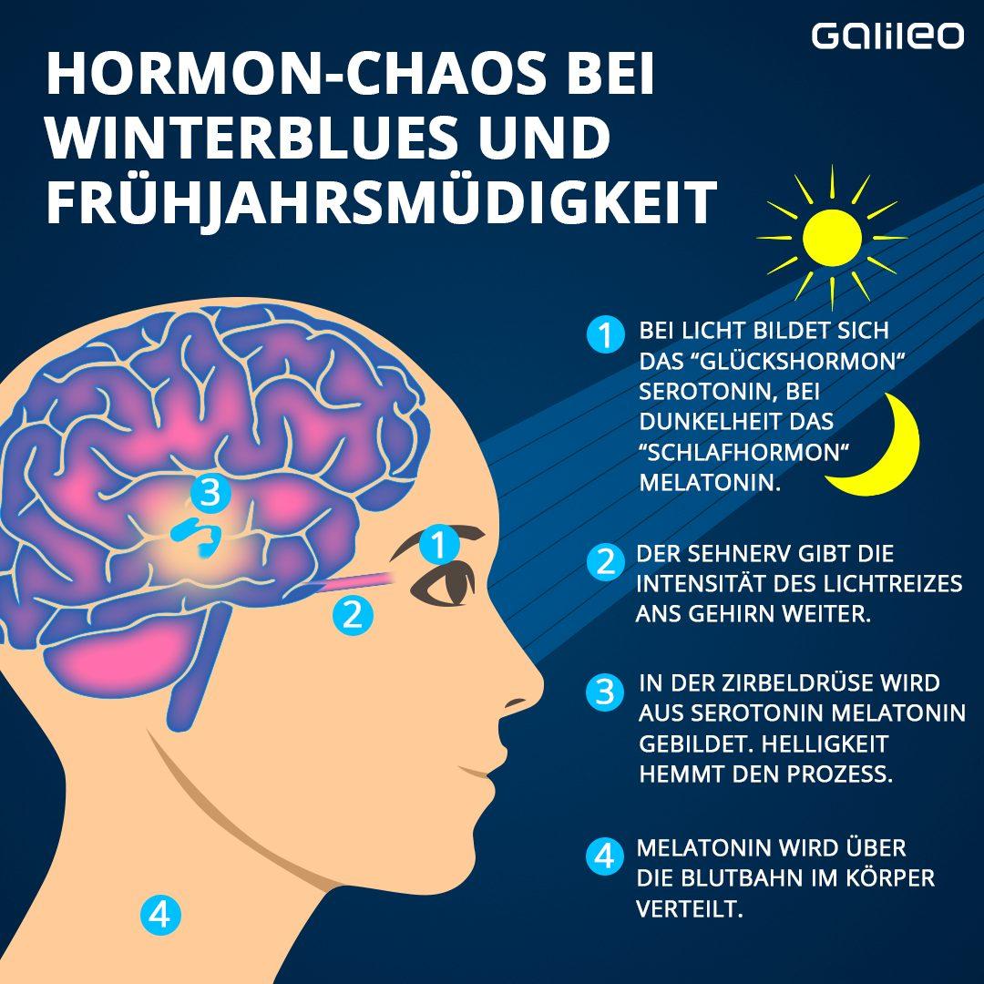 Winterblues und Frühjahrsmüdigkeit - das passiert im Gehirn