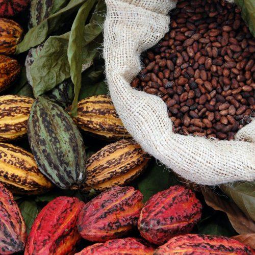 Schokolade ohne Zucker? Das geht dank Kakao-Fruchtsaft. Wie der neue Snack zum Hype wurde, erklären wir hier.