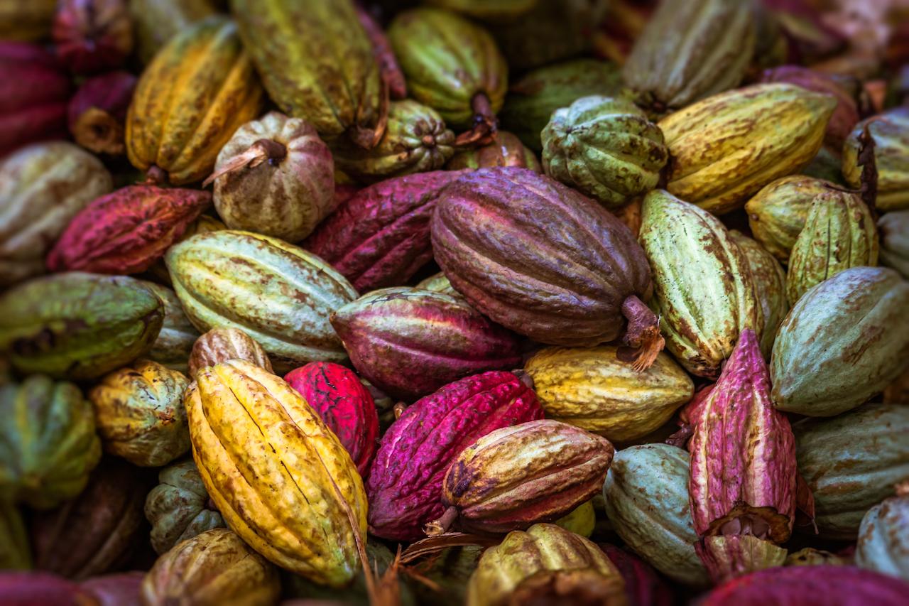 Zack, die Bohne! Warum Kakao heilt, schlau und schön macht